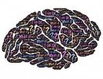 brain-859329__180